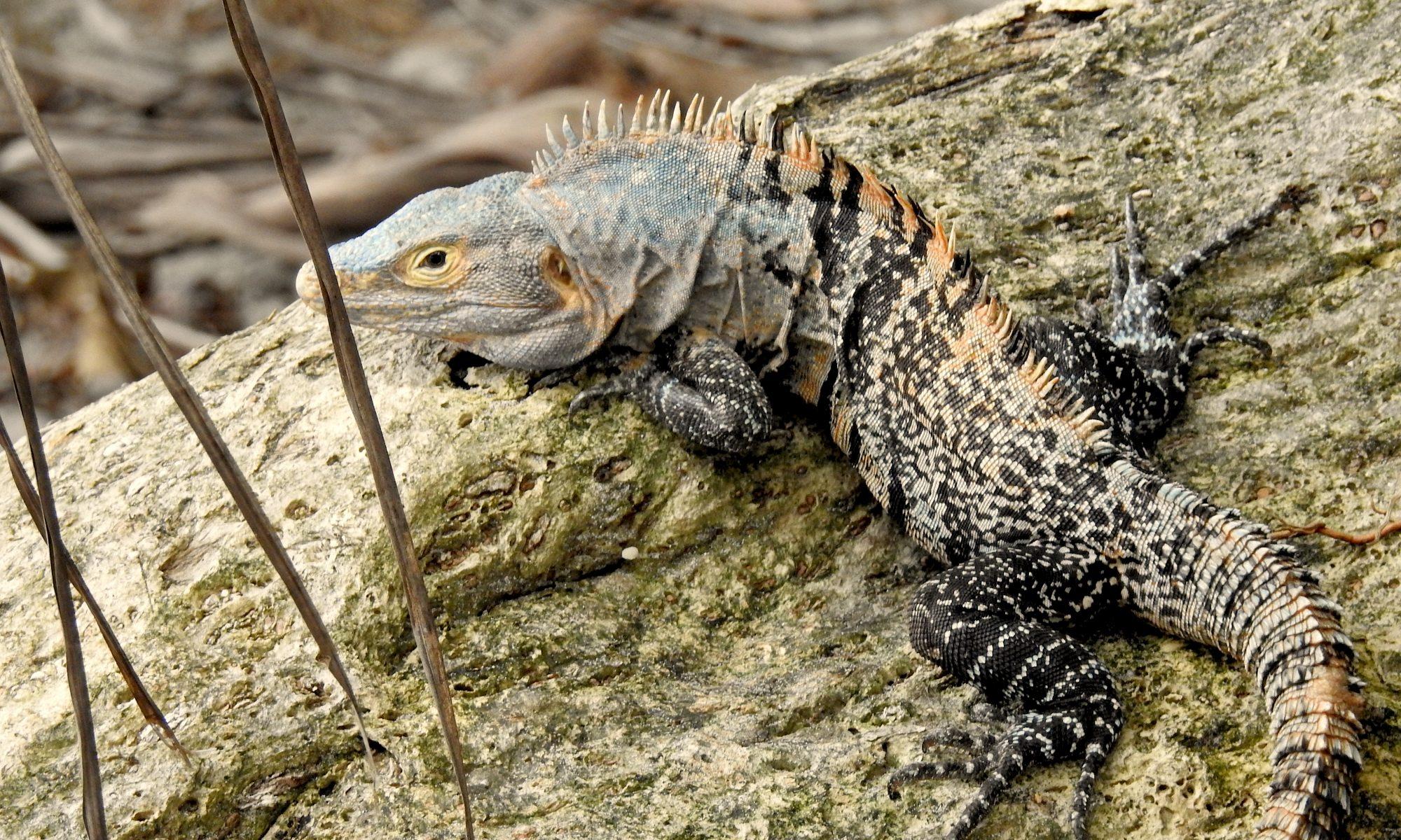 Tierschutz in Mittelamerika