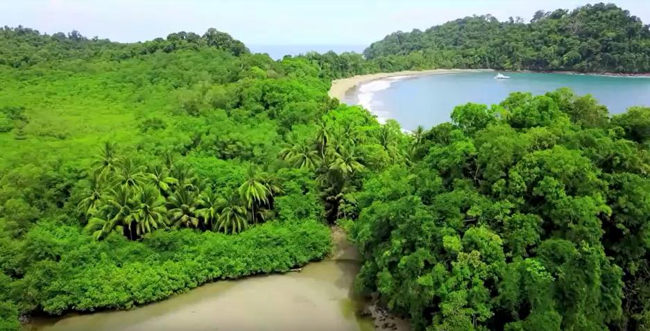 Costa Rica grüner Wald